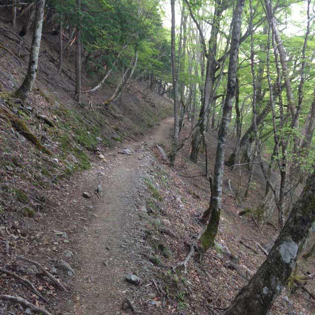 雲取山の登山写真「ブナ坂」