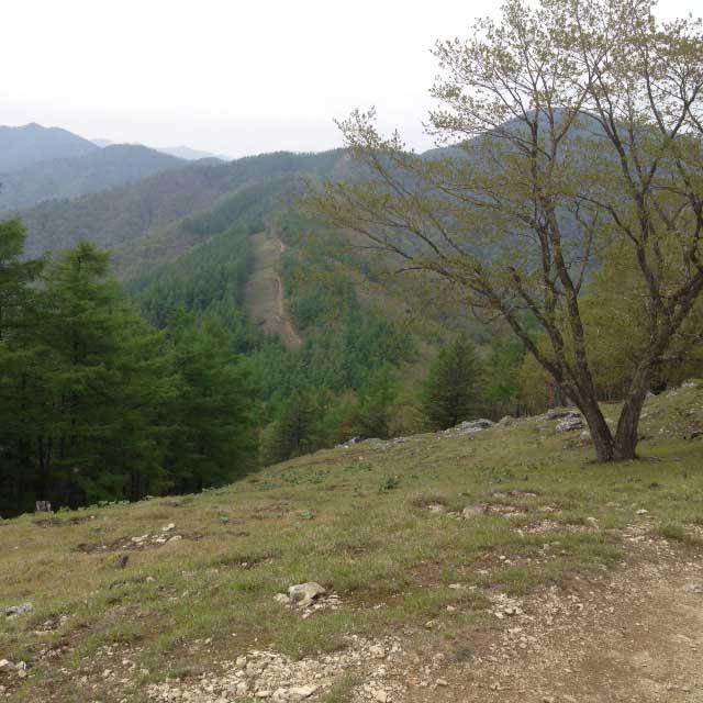 雲取山の登山写真「尾根道」