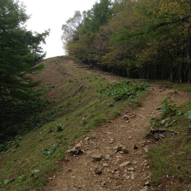 雲取山の登山写真「石尾根縦走路」