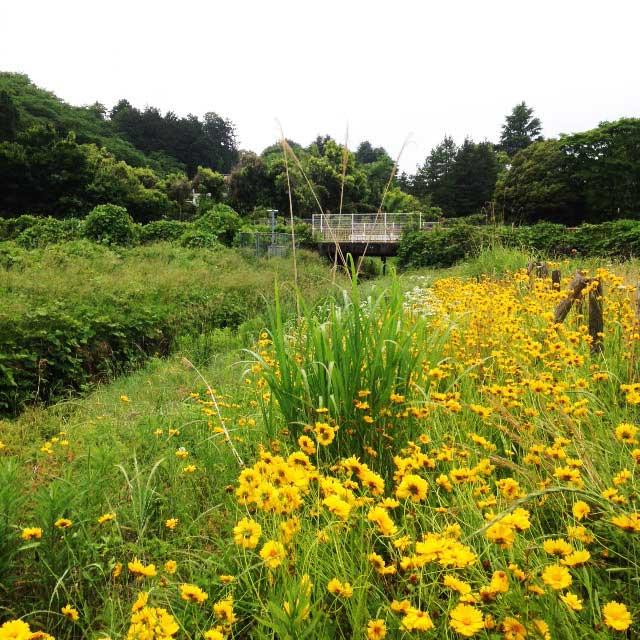 ムーミンパーク。宮沢湖散策。菜の花