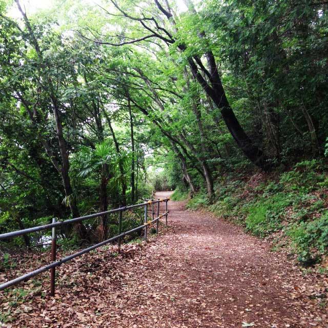 ムーミンパーク。宮沢湖散策。落ち葉に埋めれる