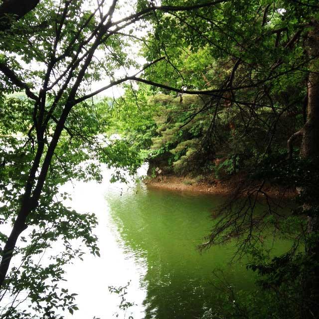 ムーミンパーク。宮沢湖散策。湖の自然