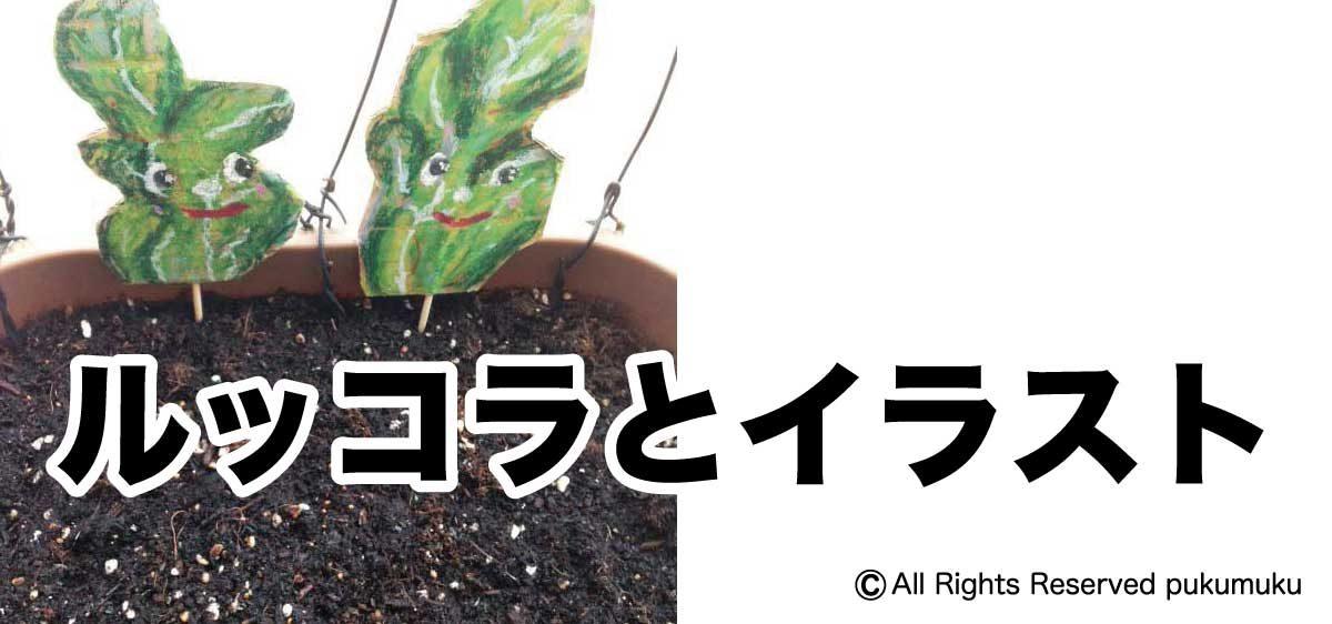 ルッコラ栽培とイラスト「アイキャッチ画像」