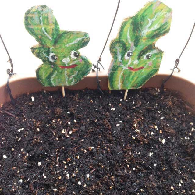 ルッコラ栽培とイラスト「プランターにイラストを配置」