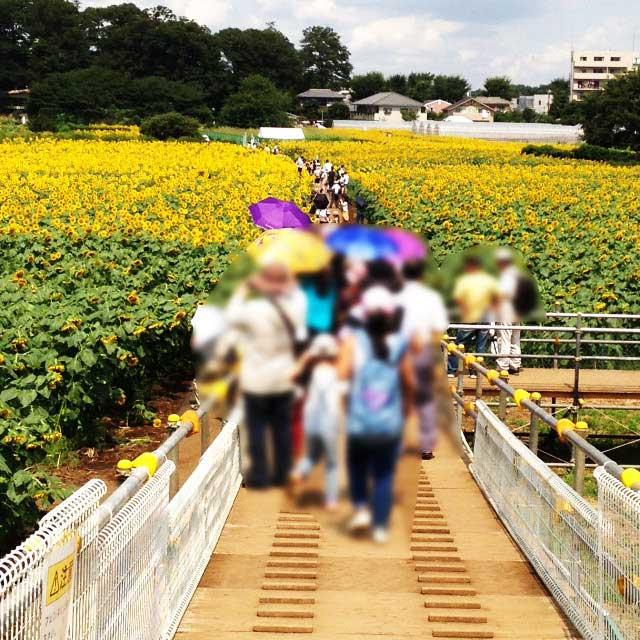 清瀬ひまわりフェスティバル「スロープ画像」