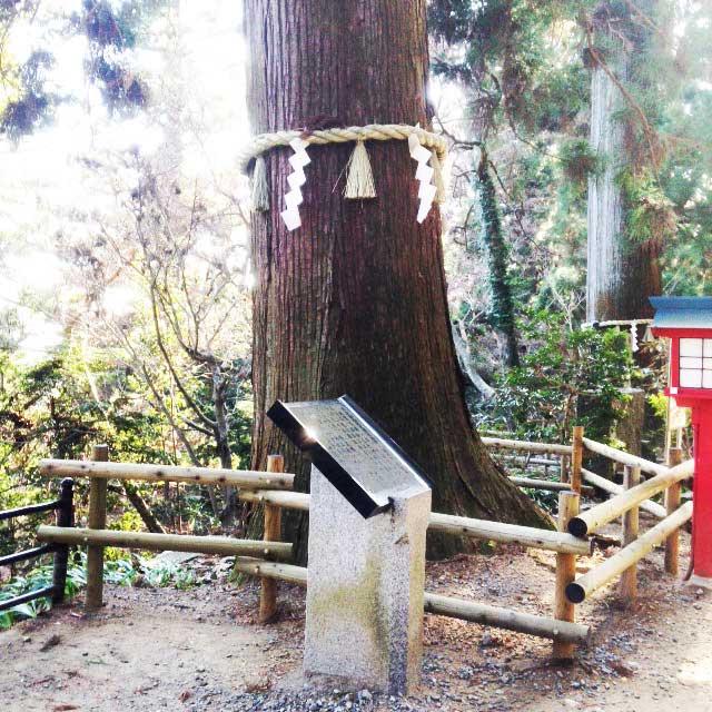 高尾山へ初詣「大きな杉」