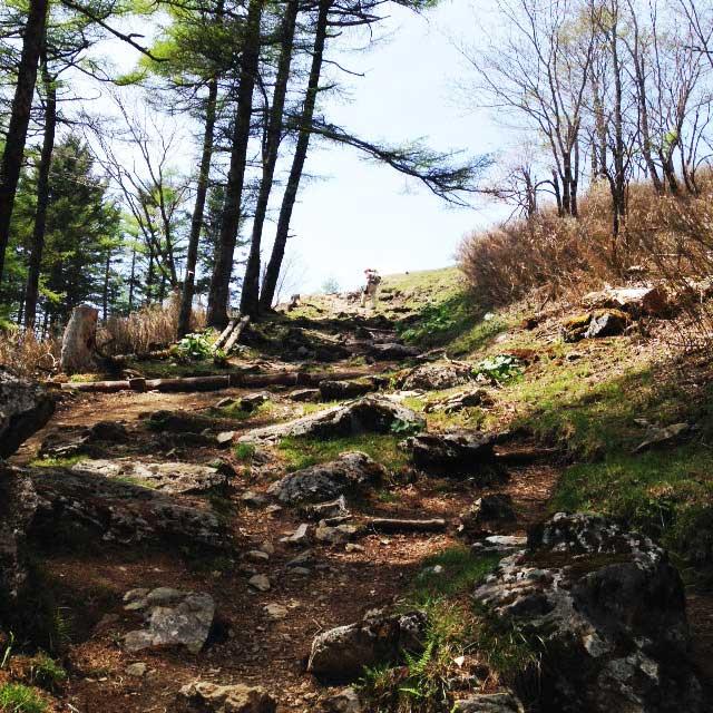 2017mの雲取山へ登る1「七ツ石山へ登る道」