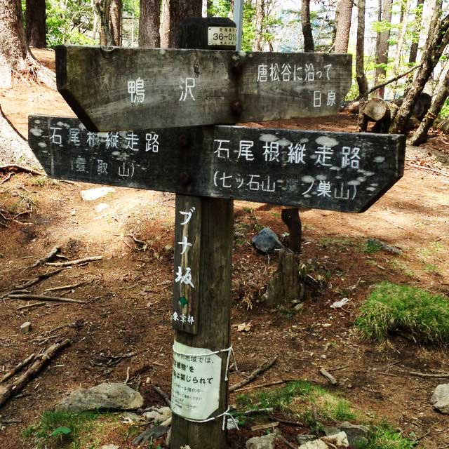 2017mの雲取山へ登る1「ブナ坂」