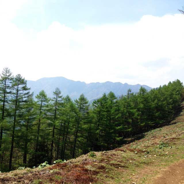 2017mの雲取山へ登る1「尾根道」