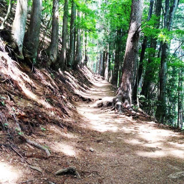 2017mの雲取山へ登る1「山道と木漏れ日」