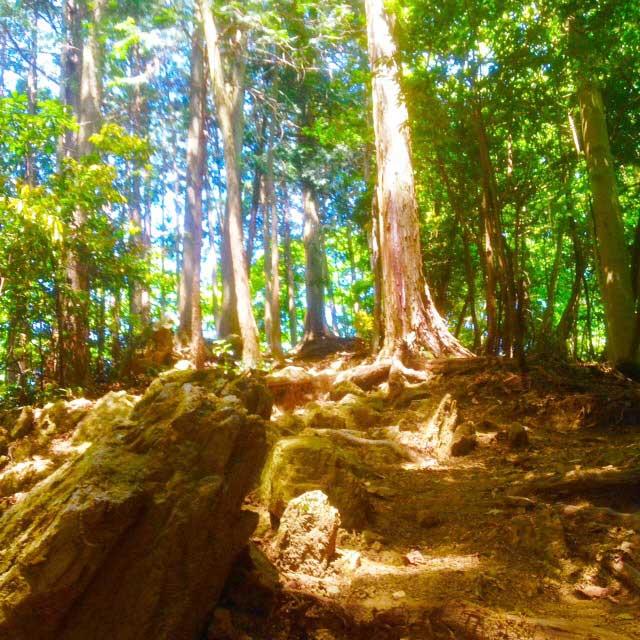 ユガテ、顔振峠、越上山を歩く「木の根」