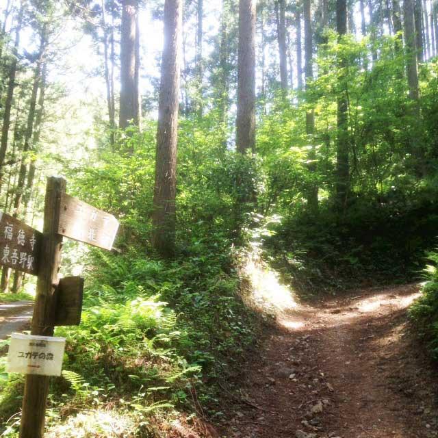 ユガテ、顔振峠、越上山を歩く「ユガテの森」