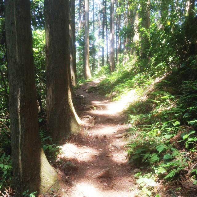 ユガテ、顔振峠、越上山を歩く「山道」