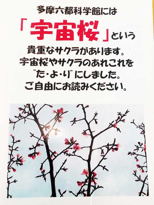 多摩六都科学館へ資料探し「宇宙桜」
