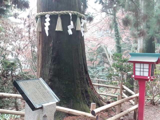 高尾山と599「杉の巨木」