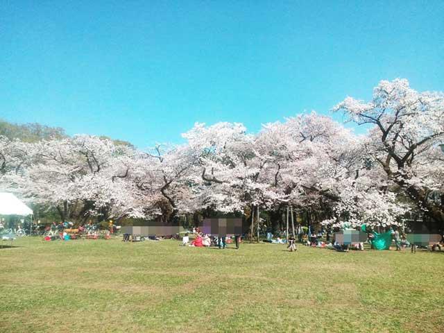 江戸東京たてもの園へ行く2018「小金井公園の桜」