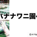 熱川バナナワニ園へ行く「アイキャッチ画像」