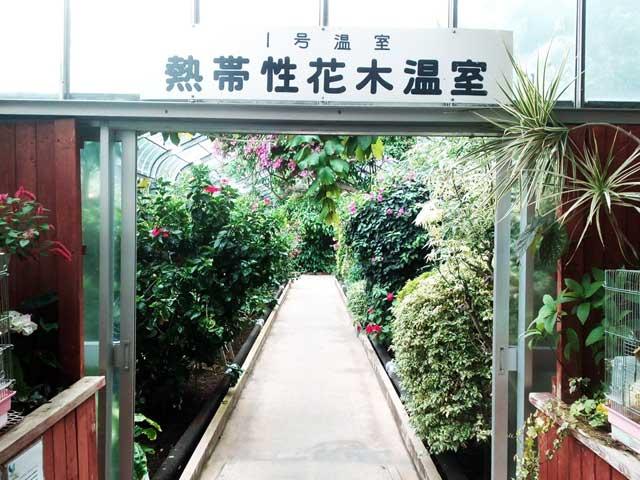 熱川バナナワニ園へ行く「熱帯性花木温室」