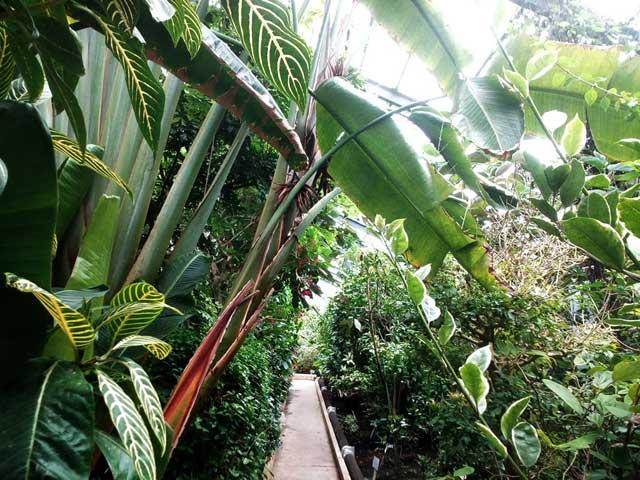熱川バナナワニ園へ行く「熱帯の植物」
