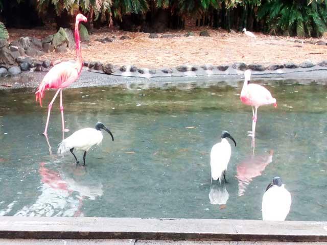 熱川バナナワニ園へ行く「フラミンゴとクロトキ」