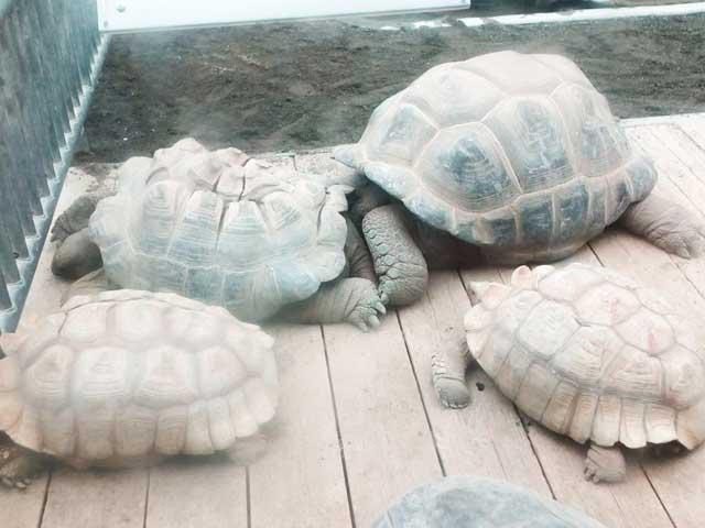 熱川バナナワニ園へ行く「ゾウガメ」