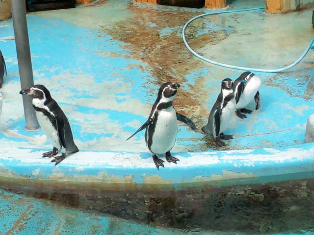 富山・高岡を散策する「ペンギン」