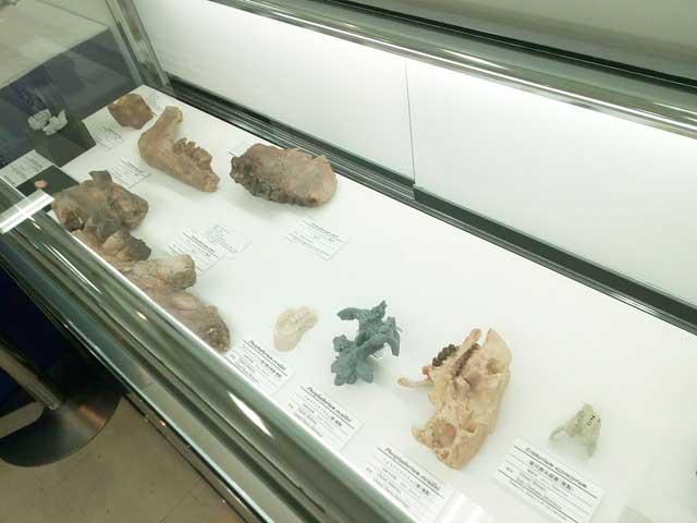 東京ミネラルショー2019へ行く「化石」