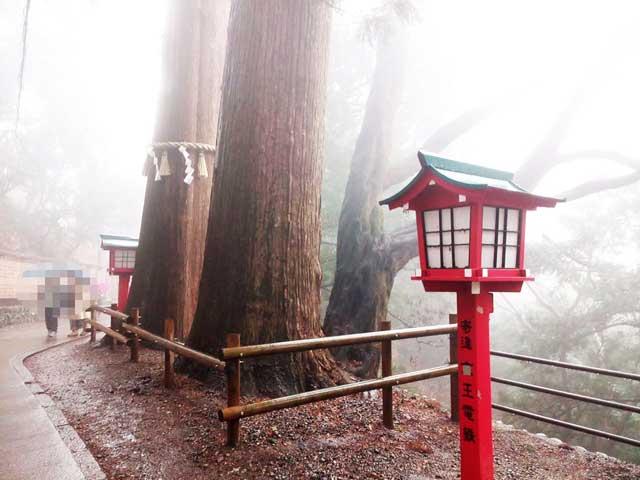 高尾山へ行く「薬王院杉の木」